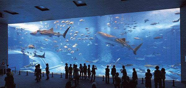 Океанариум в Москве на ВДНХ-ВВЦ