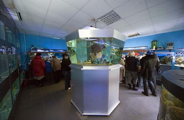 Экспозиционный зал в океанариуме в доме Чистопрудный бульвар, 14 в городе Москве