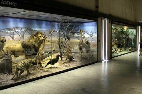 Экспозиционный зал Дарвиновского музея