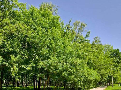 Черкизовский парк и пруд в Москве