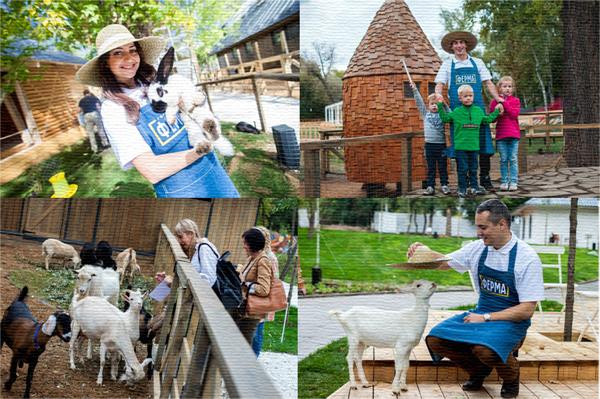 Городская ферма в Москве на ВДНХ